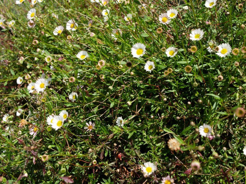 Natur Garten Haar